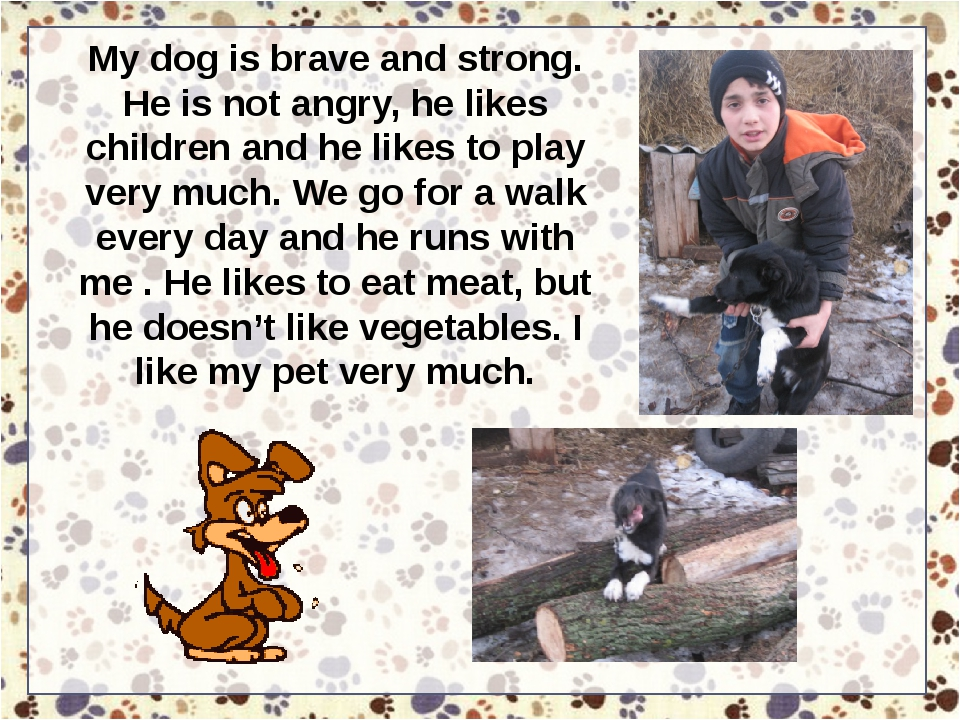 My dog is brave and strong. He is not angry, he likes children and he likes t...