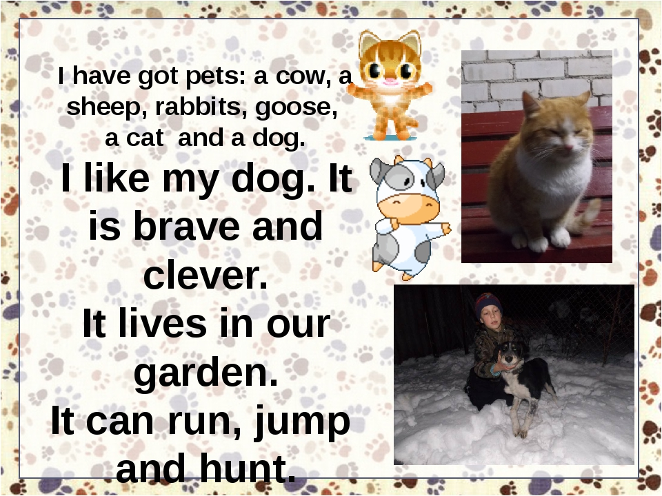I have got pets: a cow, a sheep, rabbits, goose, a cat and a dog. I like my d...