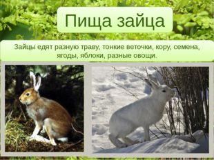 Пища зайца Зайцы едят разную траву, тонкие веточки, кору, семена, ягоды, ябл