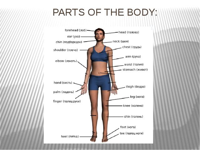 PARTS OF THE BODY:
