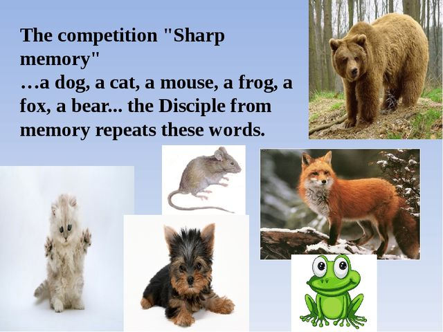 "The competition ""Sharp memory"" …a dog, a cat, a mouse, a frog, a fox, a bear...."