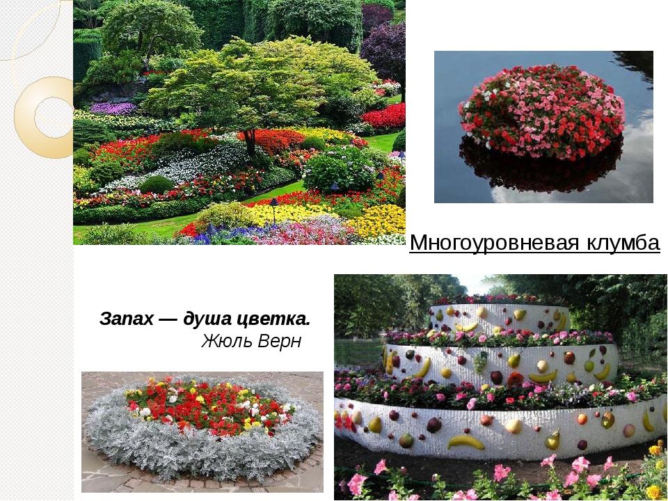Запах — душа цветка. Жюль Верн Многоуровневая клумба