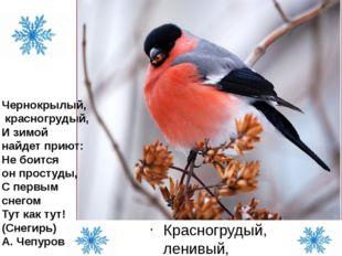 Красногрудый, ленивый, малоподвижный Чернокрылый, красногрудый, И зимой н
