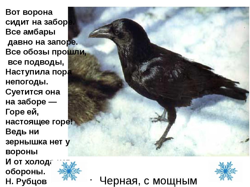 Черная, с мощным клювом, глянцевыми перьями, каркает Вот ворона сидит на забо...