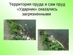 Территория пруда и сам пруд «Ударник» оказались загрязненными