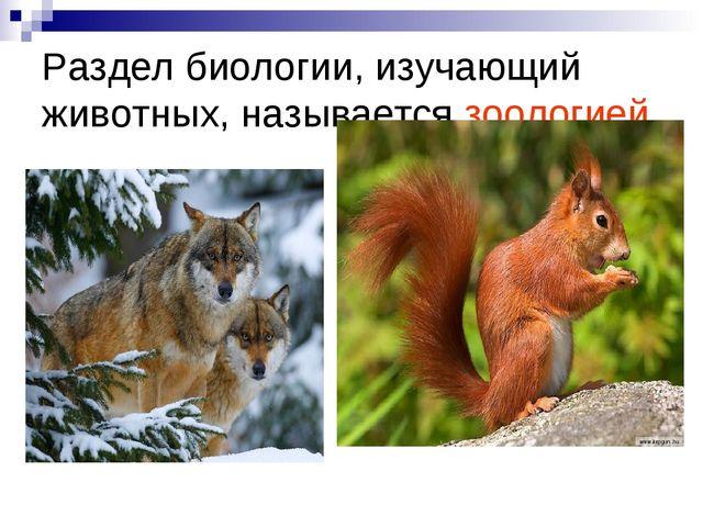 Раздел биологии, изучающий животных, называется зоологией.