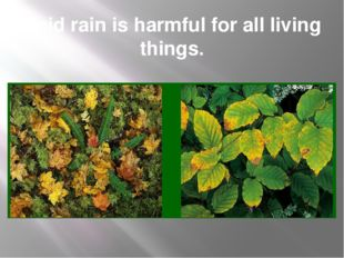 Acid rain is harmful for all living things.