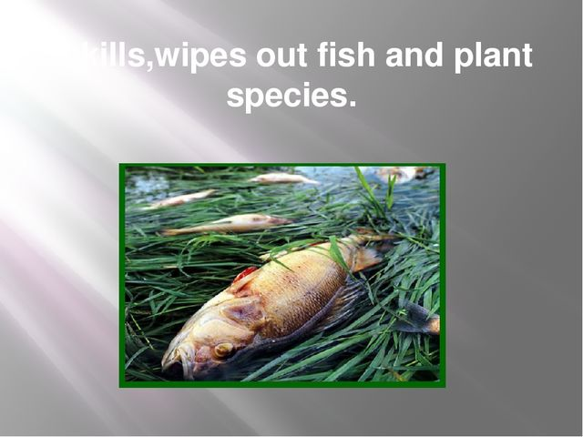 It kills,wipes out fish and plant species.