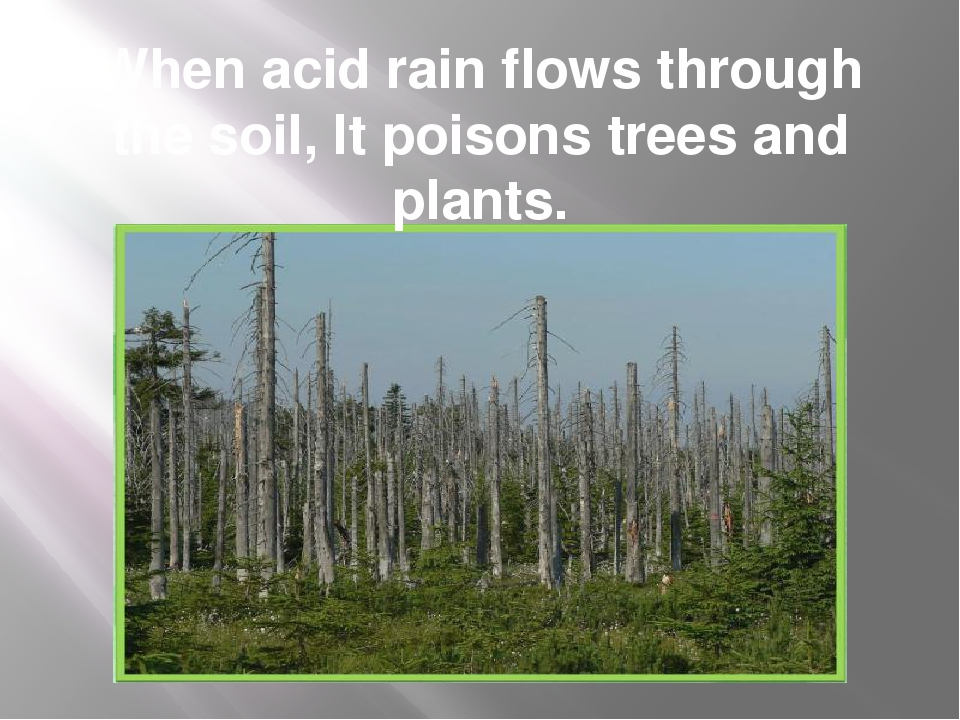 When acid rain flows through the soil, It poisons trees and plants.