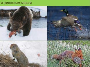 и животным миром