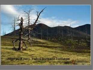 «Мертвый лес». Район Вулкана Толбачик
