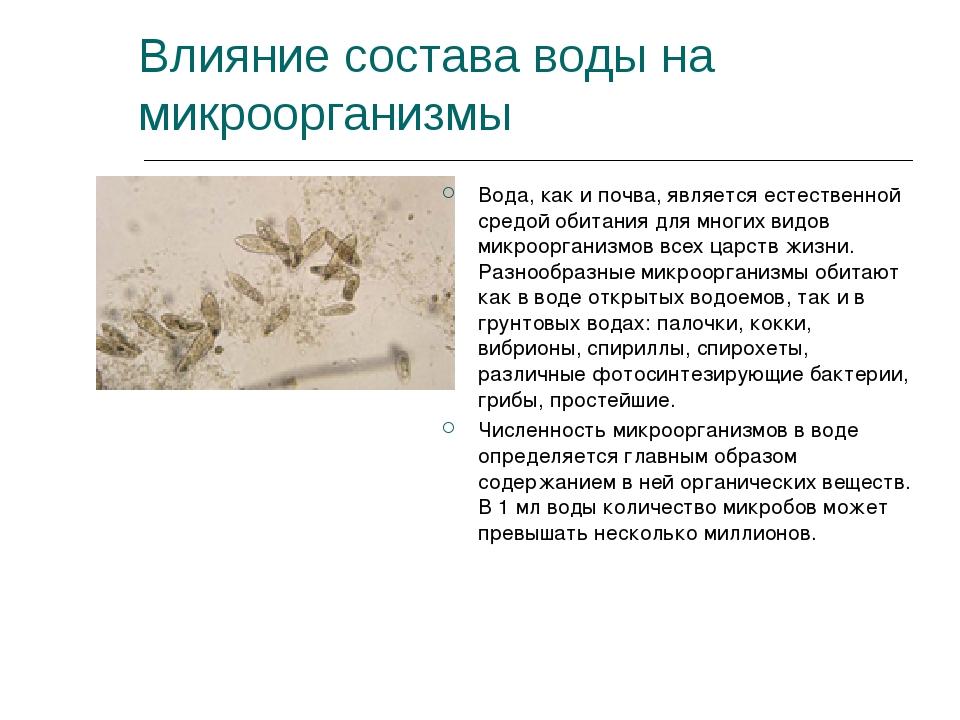 Влияние состава воды на микроорганизмы Вода, как и почва, является естественн...