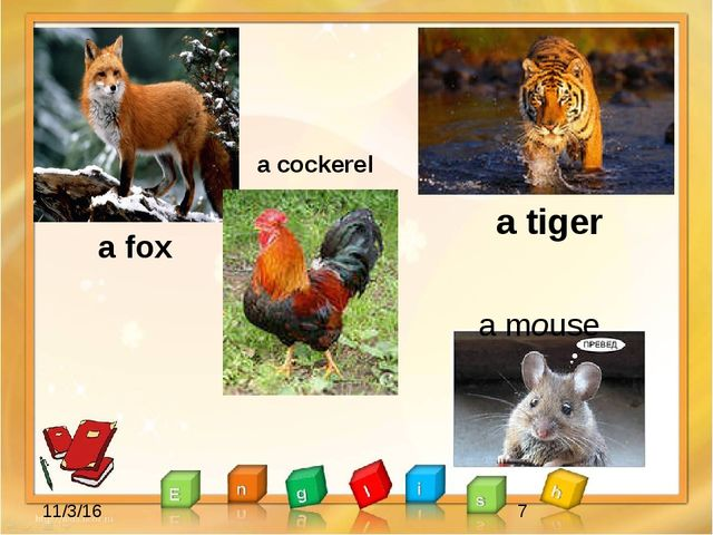 a fox a cockerel a tiger a mouse