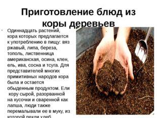 Приготовление блюд из коры деревьев Одиннадцать растений, кора которых предла