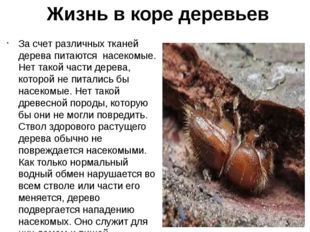 Жизнь в коре деревьев За счет различных тканей дерева питаются насекомые. Нет