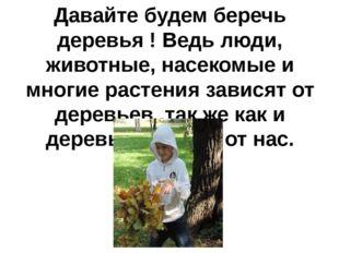 Давайте будем беречь деревья ! Ведь люди, животные, насекомые и многие растен