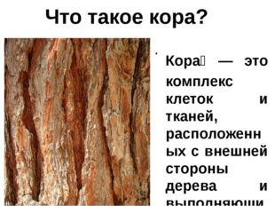 Кора́— это комплекс клеток и тканей, расположенных с внешней стороны дерева