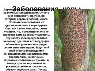 Заболевания коры. Деревья, как и люди, подвержены различным заболеваниям. От