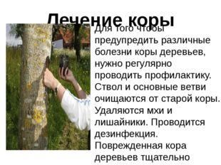 Лечение коры Для того чтобы предупредить различные болезни коры деревьев, нуж