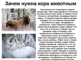 Зачем нужна кора животным Практически все травоядные звери в холода едят лишь
