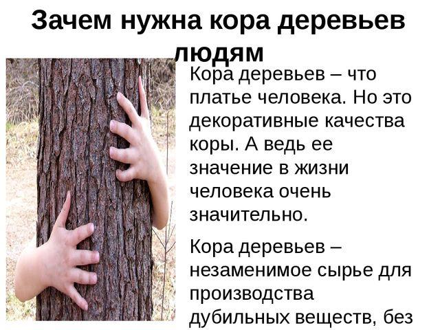 Зачем нужна кора деревьев людям Кора деревьев – что платье человека. Но это д...