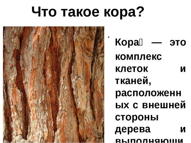 Кора́— это комплекс клеток и тканей, расположенных с внешней стороны дерева...