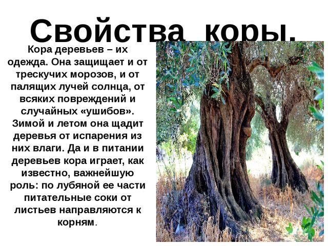 Свойства коры. Кора деревьев – их одежда. Она защищает и от трескучих морозов...