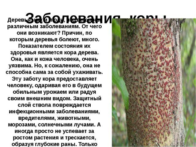 Заболевания коры. Деревья, как и люди, подвержены различным заболеваниям. От...