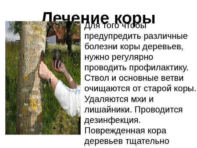 Лечение коры Для того чтобы предупредить различные болезни коры деревьев, нуж...