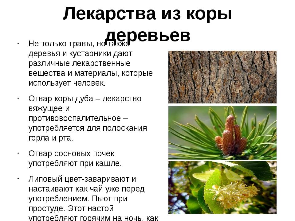 Лекарства из коры деревьев Не только травы, но также деревья и кустарники даю...