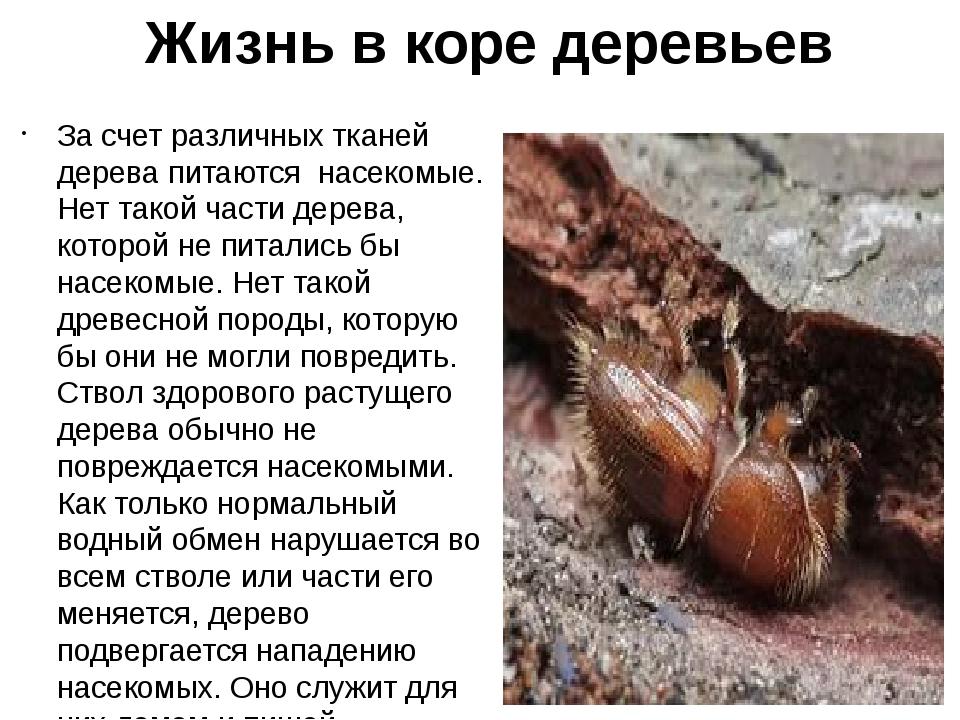 Жизнь в коре деревьев За счет различных тканей дерева питаются насекомые. Нет...