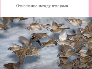 Отношение между птицами