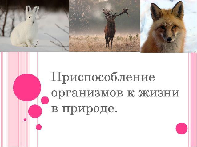 Приспособление организмов к жизни в природе.