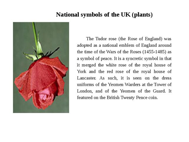 National symbols of the UK (plants) The Tudor rose (the Rose of England) was...