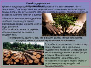 Сажайте деревья, не подстригайте их Деревья предотвращают эрозию почвы, дере