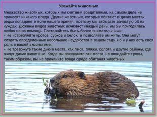 Уважайте животных Множество животных, которых мы считаем вредителями, на сам