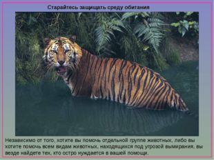 Старайтесь защищать среду обитания животных Независимо от того, хотите вы по