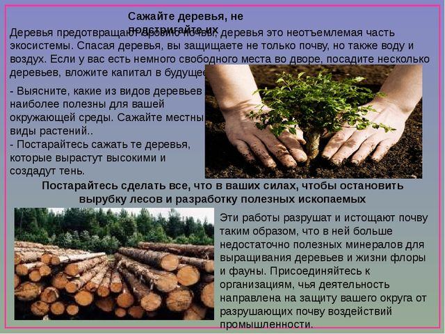 Сажайте деревья, не подстригайте их Деревья предотвращают эрозию почвы, дере...