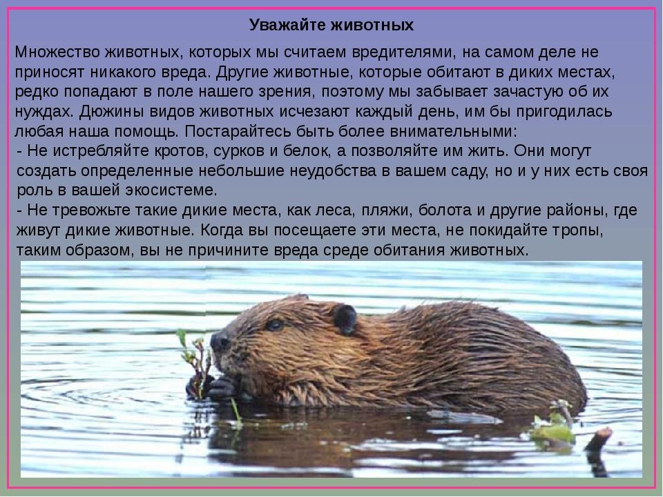Уважайте животных Множество животных, которых мы считаем вредителями, на сам...