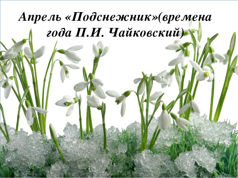 Апрель «Подснежник»(времена года П.И. Чайковский)