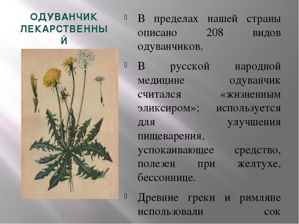 Препараты одуванчика лекарственного