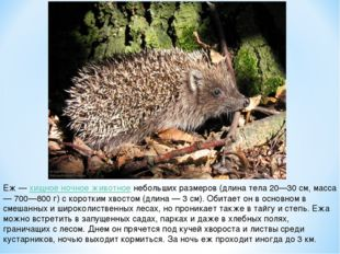 Еж — хищное ночное животное небольших размеров (длина тела 20—30 см, масса —