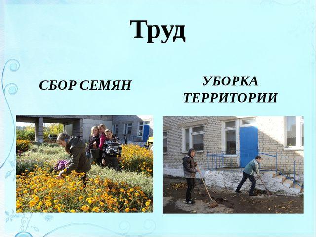 Труд СБОР СЕМЯН УБОРКА ТЕРРИТОРИИ