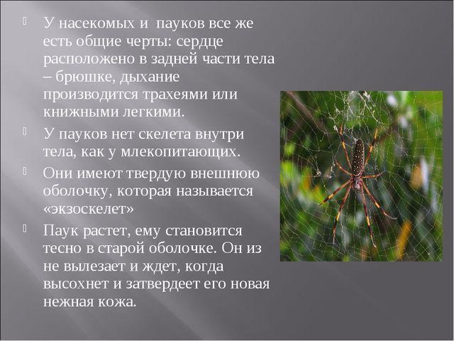 У насекомых и пауков все же есть общие черты: сердце расположено в задней час...
