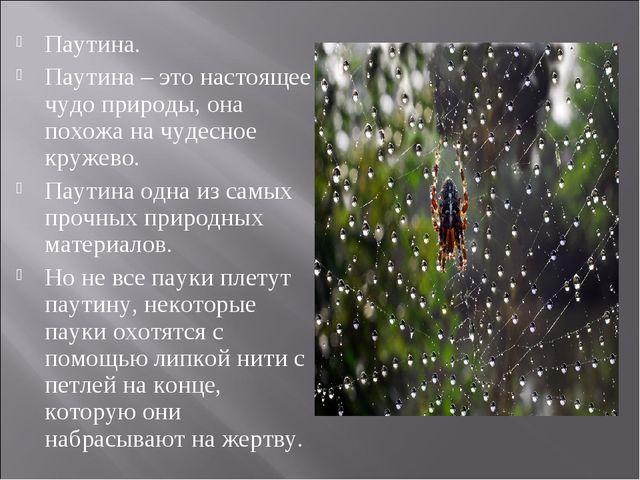 Паутина. Паутина – это настоящее чудо природы, она похожа на чудесное кружево...