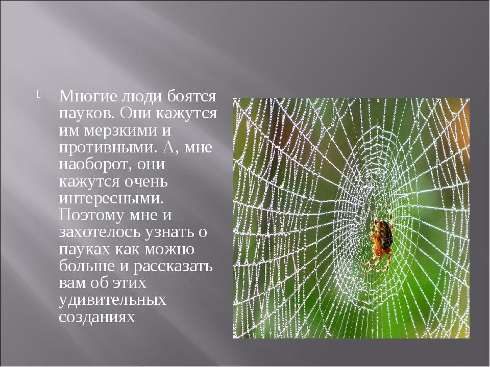 Многие люди боятся пауков. Они кажутся им мерзкими и противными. А, мне наобо...