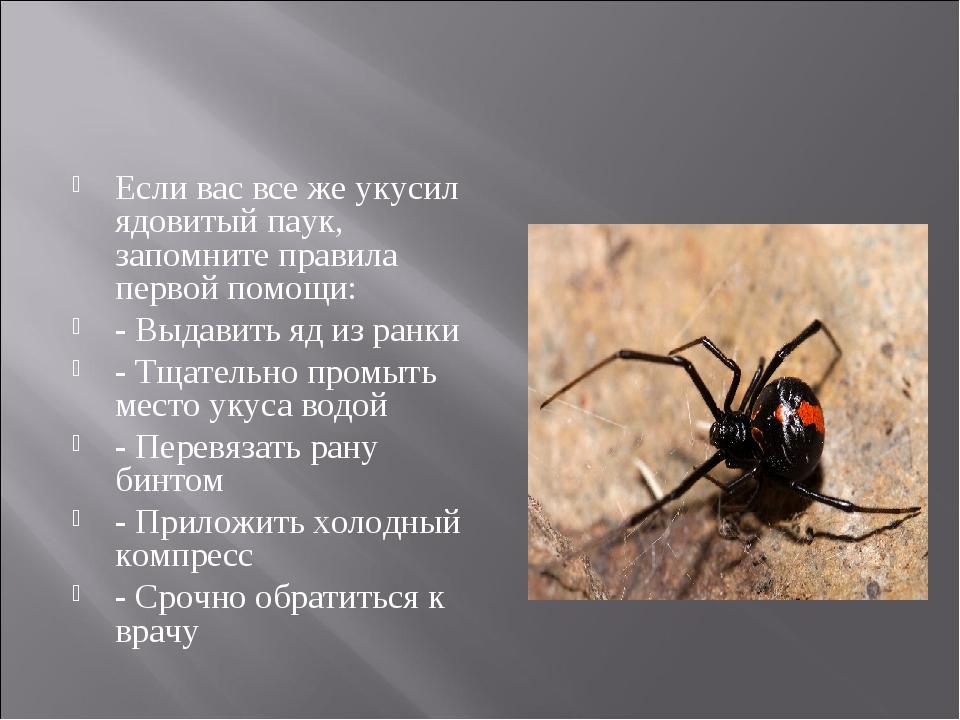 Если вас все же укусил ядовитый паук, запомните правила первой помощи: - Выда...