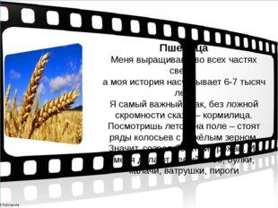 Пшеница Меня выращивают во всех частях света, а моя история насчитывает 6-7