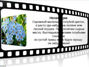 Незабудка Скромный маленький голубой цветок, я расту где-нибудь на поляне ил