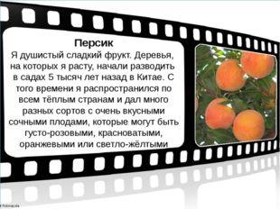 Персик Я душистый сладкий фрукт. Деревья, на которых я расту, начали разводит